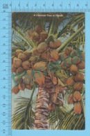 US-Florida ( A Cocoanut Tree In Florida,CPSM Linen Postcard ) Recto/Verso - Fleurs, Plantes & Arbres