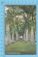 US-Florida ( A Royal Palm Avenue , CPSM   Linen Postcard ) Recto/Verso - Fleurs, Plantes & Arbres