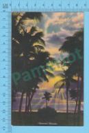 US-Florida (superb Colored Sunrise In Florida,  CPSM    Linen Postcard ) Recto/Verso - Fleurs, Plantes & Arbres