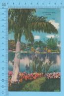 US-Florida (Lone Royal Palm In Florida,  CPSM    Linen Postcard ) Recto/Verso - Fleurs, Plantes & Arbres