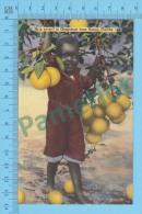 US-Florida ( Little Black Guy And Sunny Grapefruit Tree,  CPSM    Linen Postcard ) Recto/Verso - Fleurs, Plantes & Arbres