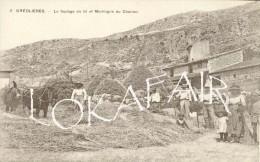 06 - Gréolière, Le Foulage Du Blé - France