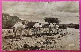 Cpsm Photo Le Visage Du Pays Somal Sur Les Grandes Routes Le Nomade S'en Va Nonchalant Carte Postale Afrique - Somalie
