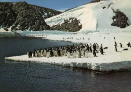 TAAF FSAT Terre Adelie Manchots Photo Robert Guillard - TAAF : Terres Australes Antarctiques Françaises