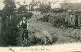 COCHON(PAYSAN) NIEVRE - Cochons