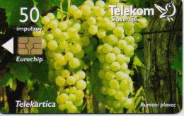 SLOVENIA PHONECARDS GRAPE VINE -5999pcs-10/03-USED - Slovénie