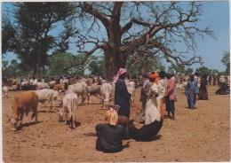 AFRIQUE,AFRIKA,AFRICA,Sén égal,réunion Des Bergers,vente De Chevre,boeuf,métier,éleve Ur - Sénégal