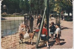 Nord :  LILLE : Le  Jardin  Des  Enfants , Le  Parc   Zoologique  1963 ( Chèvre) - Lille