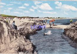 CPSM 10X15  D' ARGELES Sur MER (66) - La Plage Du RACOU  N° 35755 - Argeles Sur Mer