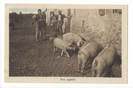 11472 -  Bon Appétit Les Cochons Et Paysans - Cochons