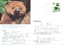 Postwaardestuk, Postal Stationery, Koala - Koeien