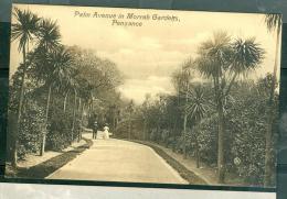 Palm Avenue In Morrab Gardens Penzance  - Fag145 - Angleterre