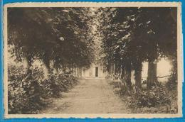 Havré (carte Circulée) - Entrée De La Chapelle De Bon-Vouloir - Allée Des Tilleuls - Mons