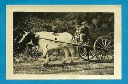 Mini CPSM Small Card CANADA - A Gaspesian Ox Card * Attelage De Boeuf PQ P. Q. Québec PHOTO Photographie - Gaspé