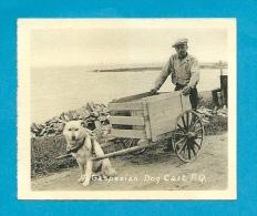Mini CPSM Small Card CANADA - Gaspesian Dog Card * Attelage De Chien PQ P. Q. Québec * Voiture à Chiens - Gaspé