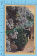 US California  ( Wisteria Blossoms, CPSM Linen Postcard ) Recto/Verso - Fleurs, Plantes & Arbres
