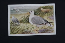 Old Trading Card/ Chromo Topic/ Theme Birds - Germany Collection - Het Leven Der Zee/ Gull - Autres