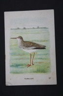 Old Trading Card/ Chromo Topic/ Theme Birds - Netherland Collection - Tureluur/ Common Redshank - Autres