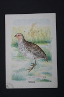 Old Trading Card/ Chromo Topic/ Theme Birds - Netherland Collection - Patrijs/ Grey Partridge - Autres