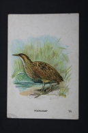 Old Trading Card/ Chromo Topic/ Theme Birds - Netherland Collection - Roerdomp/ Eurasian Bittern - Autres