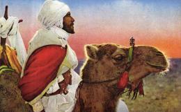 83961 - Afrique     Sc�nes et Types  d'Afrique du Nord       Arabe du Sud et son Chameau