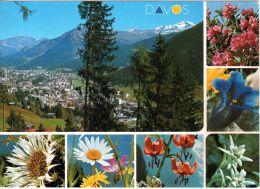 Davos Gegen Rhätikon, Mit Alpenblumen, Photo Furter Davon, Nicht Gelaufen - GR Grisons