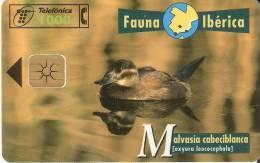 ¡¡OFERTA!! TARJETA DE LA MALVASIA CABECIBLANCA SÓLO 0,60 EUROS - Spanje