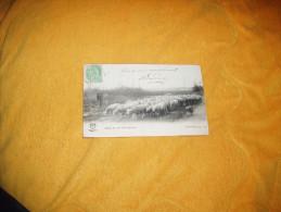 CARTE POSTALE ANCIENNE CIRCULEE DE 1903. / ACHETEZ LES, MES PETITS AGNEAUX.  / CACHETS + TIMBRE - Veeteelt