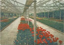 K2734 Torino - Parco Del Valentino - Esposizione Internazionale Fiori Dal Mondo 1961 / Viaggiata 1965 - Expositions