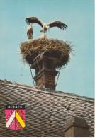 NID  DE  CIGOGNES                           (VIAGGIATA) - Vögel