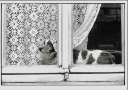 CARTE POSTALE (C) PHOTO DE JANE EVELYN ATWOOD 1989 : RUE DE LA TOMBE ISSOIRE / PARIS 1978 ; CHIEN - Illustrateurs & Photographes