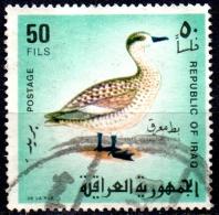 IRAQ 1968 Iraqi Birds - 50f - Marbled Teal FU - Iraq