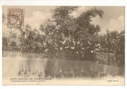S2185  - Jardin Botanique Des Pamplemousses - Maurice