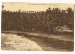 S2231-  20- Uma Plantaçao Da Coqueiros - Pérou