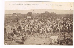 CPA Ain-Temouchent Le Marché Aux Bestiaux - Algerien