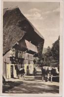 ALLEMAGNE,GERMANY,deutsch Land,bade Wurtemberg,lahr,aus Dem Schwarzwald,FERME VACHE,rare