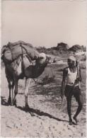 Sénégal,afrique, De L´ouest,période Coloniale,subsaharienne,M étier,transport D´arachides,routier En Chameau,rare - Sénégal