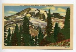 OE6/ Wild Flowers Mount Rainier WA - Vancouver