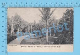 Lower Hutt ( Tropical Plant At Bellevue Garden CPA Undivided  Postcard ) Recto/Verso - Nouvelle-Zélande