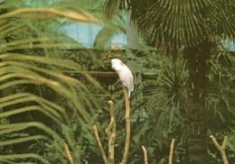 Postcard - Glasgow Green Winter Garden - The Pearch. L6/SP.5556 - Birds