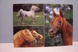 CHEVAUX  ( N°5651 ) - Pferde