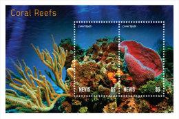 Nevis-2014-Coral Reefs-Marine Life - Ohne Zuordnung