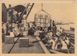 Reclame    Pure Ceylon Tea Brand  Verscheping Van Thee In Haven Colombo    Greinstraat 42 Antwerpen          Nr 433 - Publicité