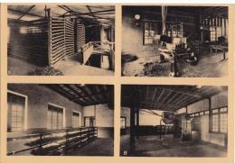 Reclame    Pure Ceylon Tea Brand  Bewerking Van De Theeblaadjes        Greinstraat 42 Antwerpen          Nr 437 - Publicité