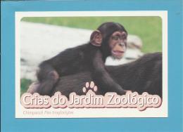 Chimpanzé ( Pan Troglodytes ) Monkey Primate - Crias Do Jardim Zoológico - Lisbon ZOO Lisboa - Portugal - Apen
