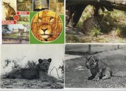 24 X   Leeuw - Lion :  (  LOT 24   Cartes Grand Format -  Root Formaat Kaarten )  110 Gram - Lions