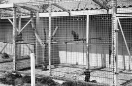 LESSAY (50) La Fosse à La Reine Cage Des Singes - France