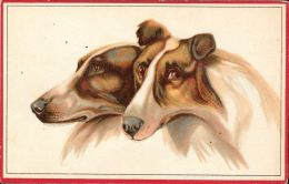 [DC5268] CARTOLINA - CANI - COLLIE - Non Viaggiata - Old Postcard - Cani