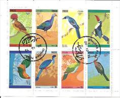 PAJAROS - Pájaros