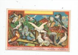 Chromo , A SAINT-EUSTACHE , Bonnin-Lecomte, CHATEAUROUX , LES PIGEONS - Chromos